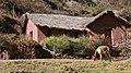 Awana Kancha - panoramio.jpg