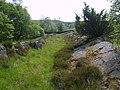 Back Reddings Allotment - geograph.org.uk - 1353476.jpg