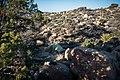 Backcountry campsite between Juniper Flats and Covington Flat (32757111827).jpg