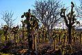 Backlit cactus 'forest' (16493742459).jpg