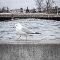 Balance, Canal Park, Duluth (33663028822).jpg