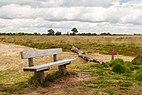 Balloërveld, natuurgebied in Drenthe 20.jpg