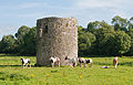 Ballybeg Priory St. Thomas Grazing Horses in front of Columbarium 2012 09 08.jpg