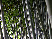 Bamboo maze (Kyoto, Japan)