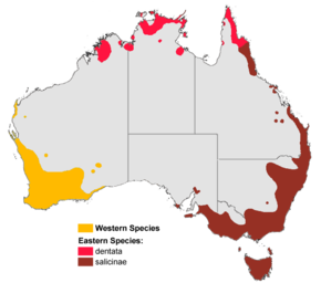 alt=Description de l'image Banksia aus dist map colour gnangarra.png.