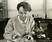 Barbara McClintock at work in her laboratory
