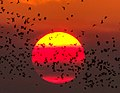 Bat Sunset.jpg