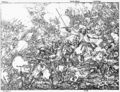 Battle at Wohlenschwil.png