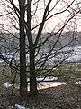Baumpaar bei Himmelsthür - panoramio.jpg