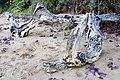 Beach Driftwood -01+ (140206242).jpg
