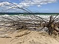 Beach erosion at Woorim beach, Bribie Island, Queensland 04.jpg