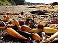Beach pods - Flickr - mscaprikell.jpg
