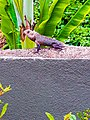 Beautiful camouflage Chameleon - reptile ~ colour changing Chameleon.jpg
