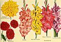 Beckert's garden annual - 1949 (1949) (19738559403).jpg
