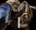 Bee 09856e08,m, thailand, tool 2014-08-09-12.06.33 ZS PMax (15805914171).jpg
