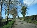 Beech Trees - geograph.org.uk - 125676.jpg