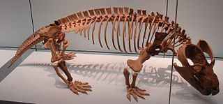 Cynodont Suborder of Therapsids