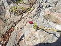 Bessen in de rotsen op Dolsando eiland I.jpg