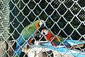 Beto Carrero Zoo - panoramio (22).jpg