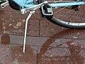 Bicycle leg.jpg
