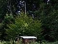 Bienwald - panoramio.jpg