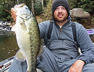 Spotted Bass Simple English Wikipedia The Free Encyclopedia