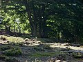 Bigbury Camp hillfort 04.jpg