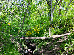 Billy Goat C Trail 4.jpg