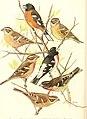 Bird lore (1912) (14750788925).jpg
