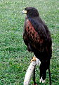 Birds15Slovakia14.JPG