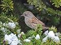 Birds in the garden (15951568640).jpg