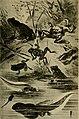 Blätter für Aquarien- und Terrarien-Kunde (1895) (20392702671).jpg