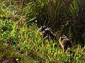 Black Point Wildlife Drive - Flickr - Rusty Clark (16).jpg