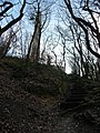 Blackdown Hills , Steps to the Wellington Monument - geograph.org.uk - 1243953.jpg