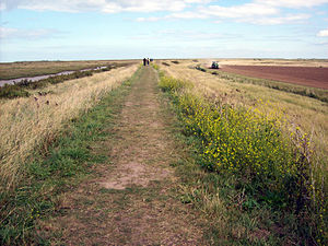 Blakeney Point - Norfolk Coast Path goes along the top of a portion of the sea wall. The salt marshes are on the left and farmland is on the right.