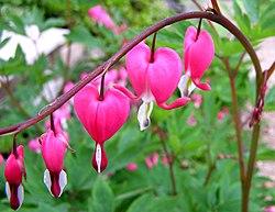 Las Flores Karina