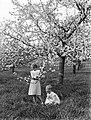 Bloeiende fruitboom in de Betuwe met Van der Polls stiefdochters Hans en Renée, Bestanddeelnr 189-1391.jpg
