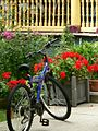 Blue bike, red geraniums (238405917).jpg