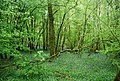 Bluebells, South Wood - geograph.org.uk - 1875687.jpg