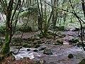 Bosahan Woods - geograph.org.uk - 1611306.jpg