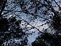 Bosc de Can Deu el 2004 10.jpg