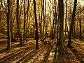 Bosco san clemente - panoramio.jpg