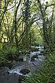 Bosque - Bertamirans - Rio Sar - 025.jpg