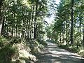 Bosque en Añihuarraque comuna Curarrehue.JPG