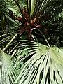BotanicGardensPisa (85).JPG