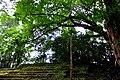 Botanic garden limbe99.jpg