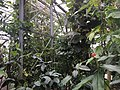 Botanische tuinen Utrecht 35.jpg