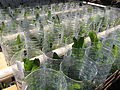 Bottled garden 02.jpg