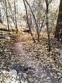 Boynton Canyon Trail, Sedona, Arizona - panoramio (118).jpg