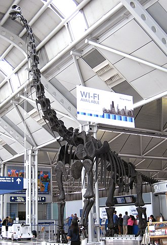 O'Hare International Airport - Reconstructed Brachiosaurus skeleton, formerly in the Field Museum, exhibited at the airport since 1999
